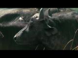 BBC: Живая природа. Ребятам о зверятах / BBC: All About Animals (Season 2, episode 2) (2006) DVDRip